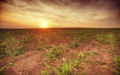 农民承包土地使用权可以转让吗
