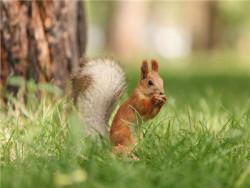 未对动物采取安全措施损害由谁担责