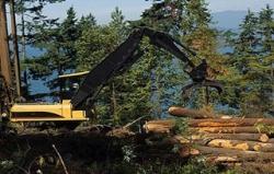 滥伐林木罪