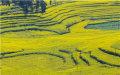 耕地土地确权期限是多久