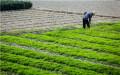 拖欠农民工工资怎么办?几招帮助你解决问题